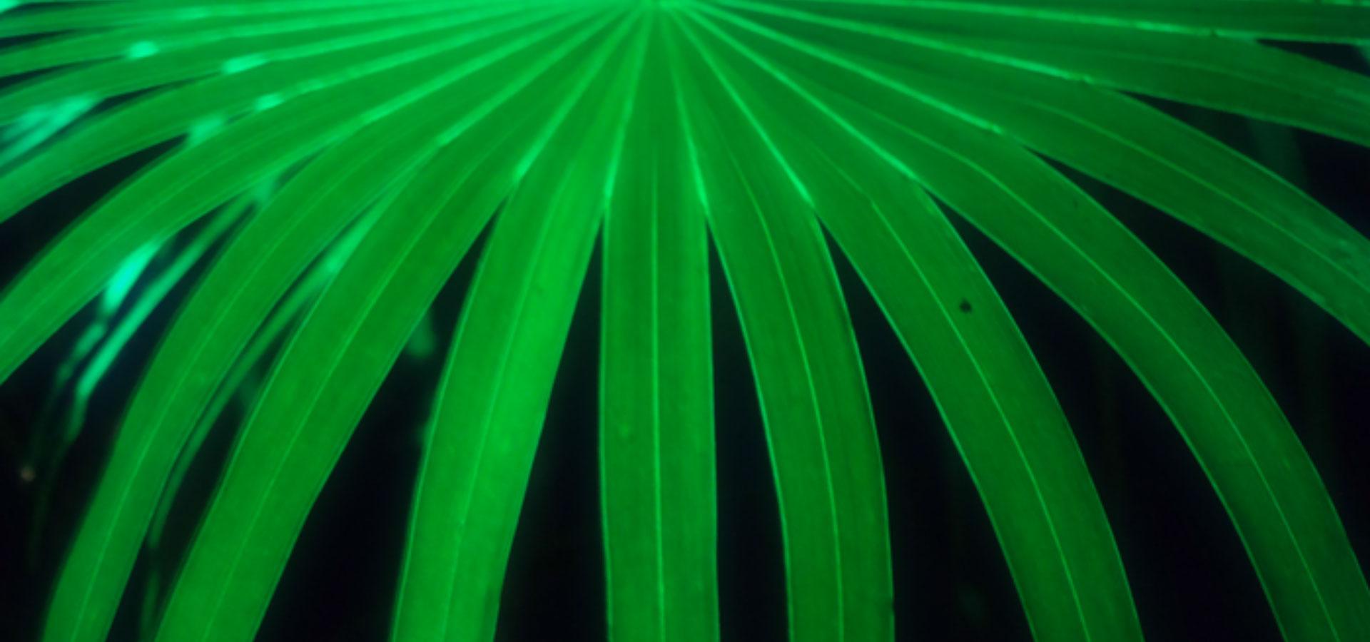 Photo of leaf by Ohlsson/Dit-Cilinn