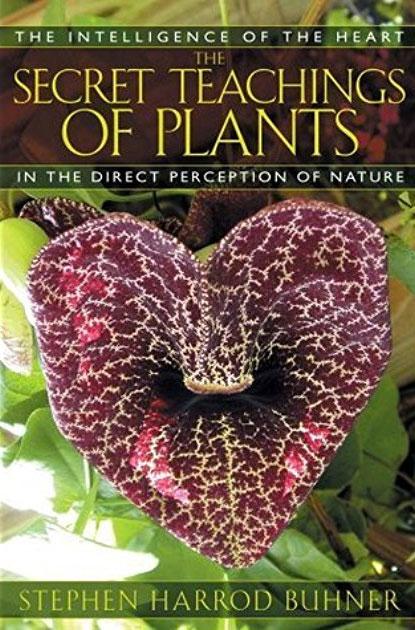 secret-teachings-plants